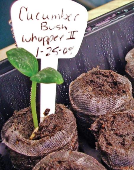 Bush_seeds_4