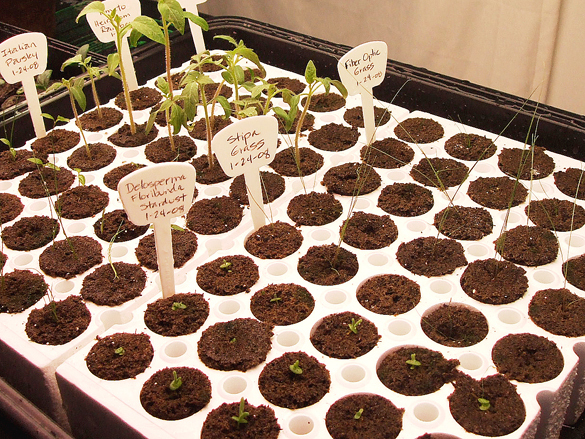 Biodome_seedlings